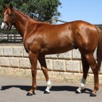 Lot 376 Chestnut Colt Universal Ruler Silksworth
